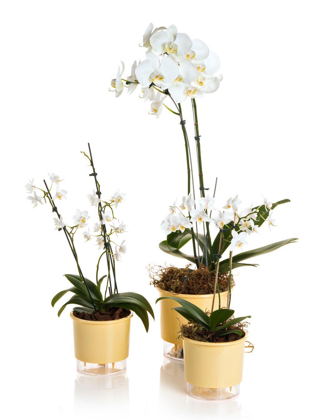 Vaso Autoirrigável Pequeno 12cm x 11cm Pêssego Wishes N02  - Vasos Raiz Loja Oficial