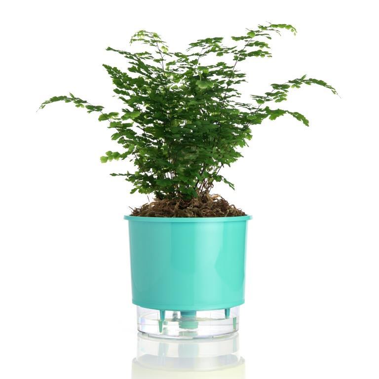 Vaso Autoirrigável Verde Raiz Médio 16cm x 14cm N03  - Loja Raiz