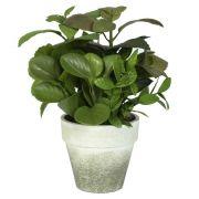 Vaso Com Folhagem Verde 22Cm 41312001