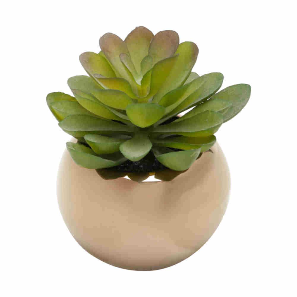 Vaso Cerâmica C/ Suculenta Rose 7,6X9,5Cm 64111 Lyor
