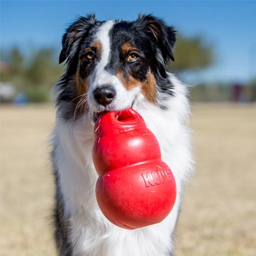 Brinquedo Interativo Para Cachorro Kong Bounzer