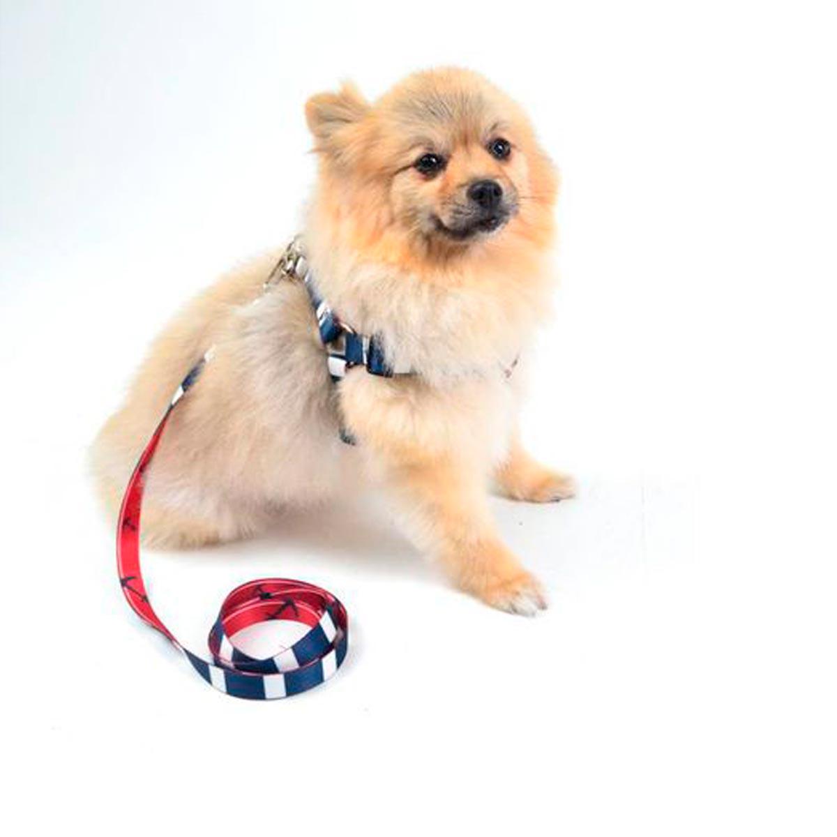 Coleira Peitoral com Guia para Cachorro Slim Marinheiro