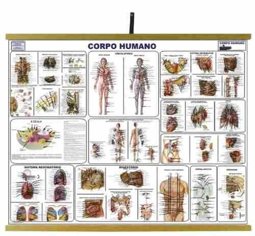 Mapas Educativos - Corpo Humano 900x1200mm