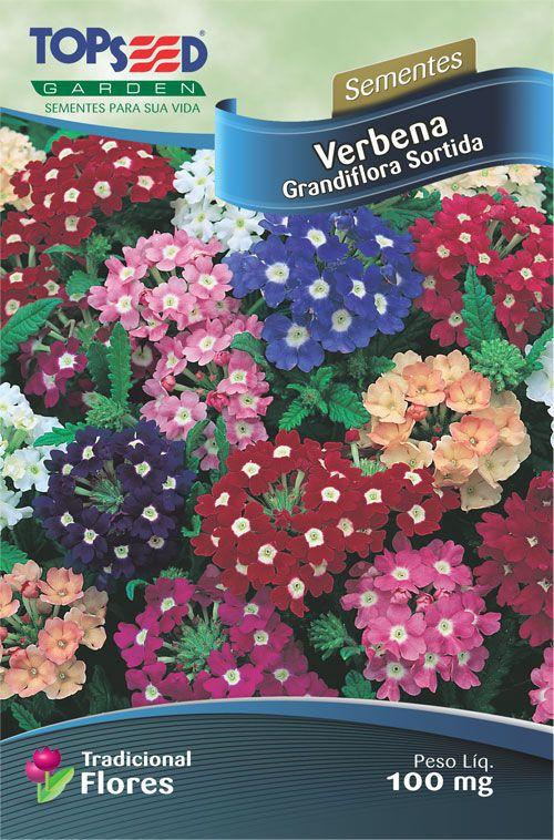 Semente 10 unidades Verbena Grandiflora Sortida F044