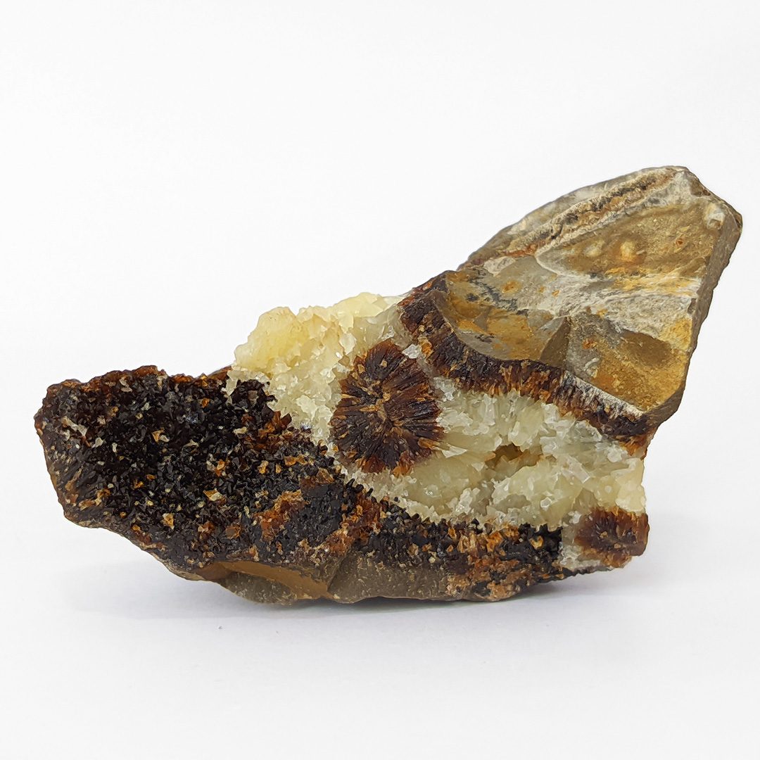 Septariana - 7,1 cm