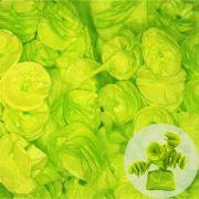 Papel de Bala Caracol Verde Claro 40 unid Real Seda