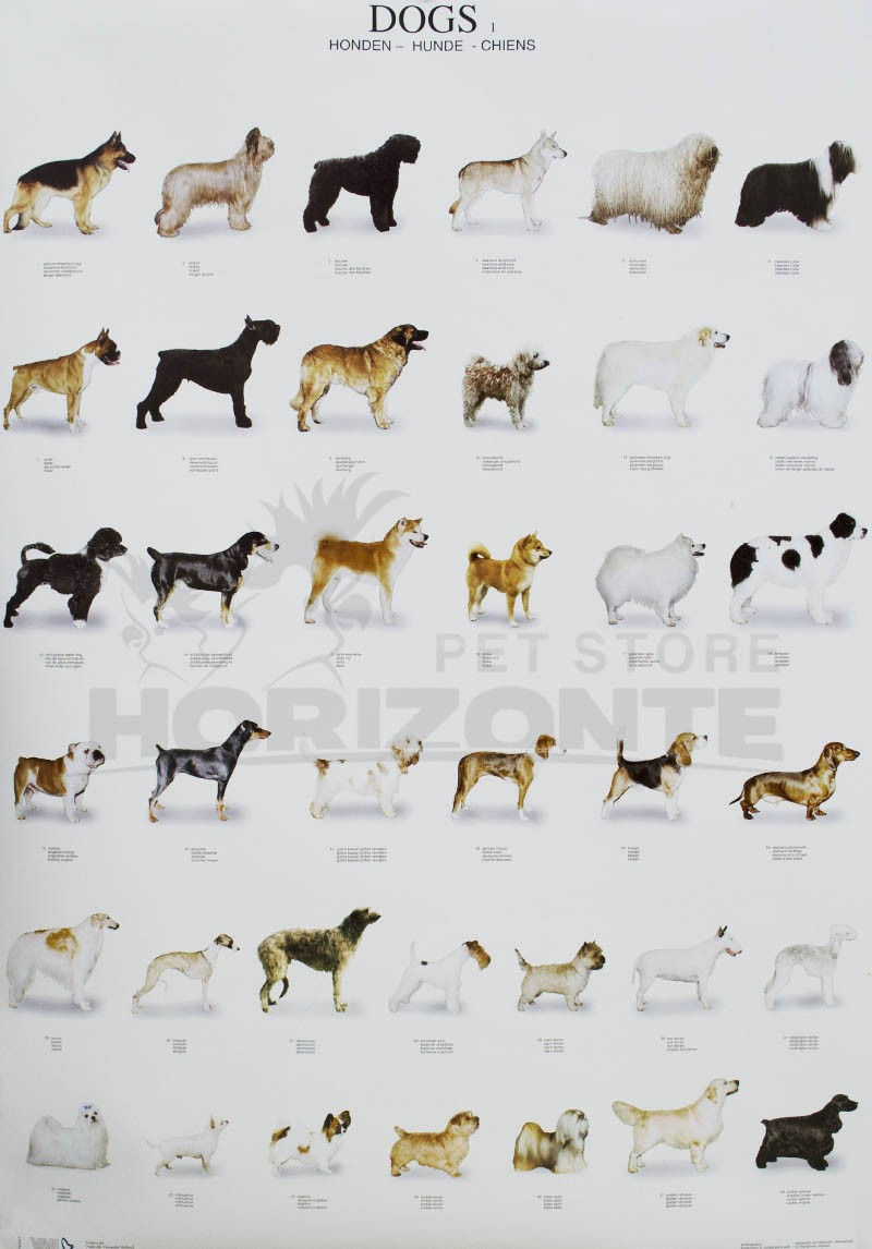 Poster Cães - Dogs 1