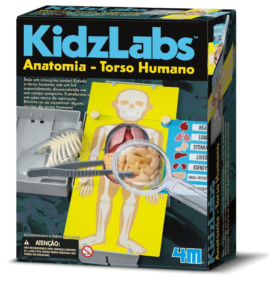 Brinquedo Cientifico Anatomia Torso Humano